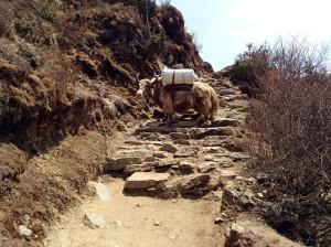 nepal-11-1